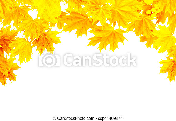 Autumn frame with yellow leaves of a maple - csp41409274