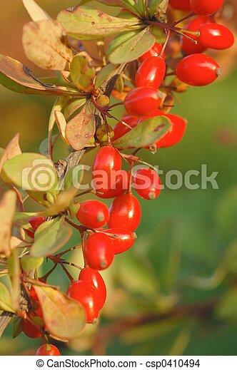 Autumn Fruits - csp0410494