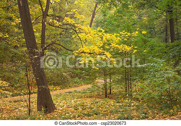 Autumn garden - csp23020673