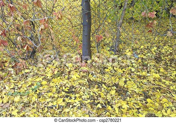 autumn garden - csp2780221