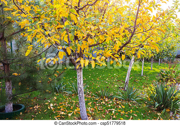 Autumn garden - csp51779518