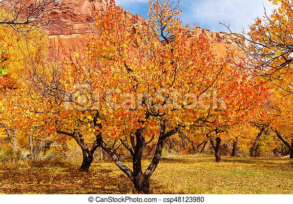 Autumn garden - csp48123980