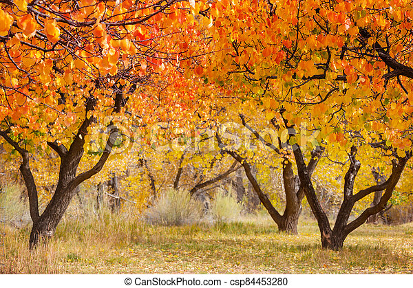 Autumn garden - csp84453280