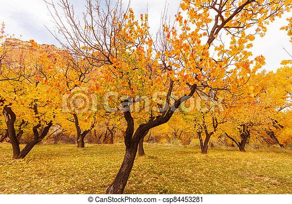 Autumn garden - csp84453281