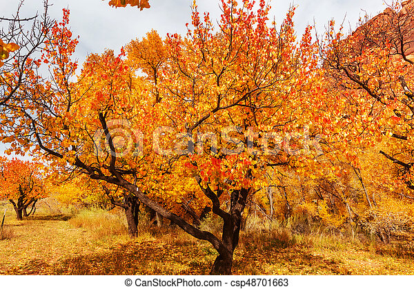 Autumn garden - csp48701663