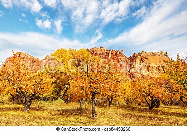 Autumn garden - csp84453266