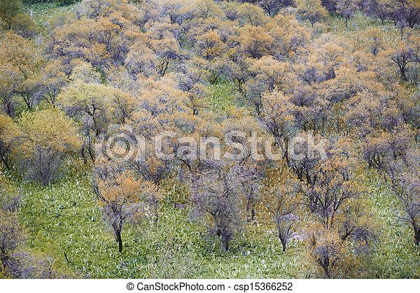 Autumn garden - csp15366252