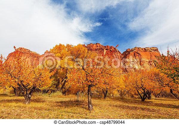 Autumn garden - csp48799044
