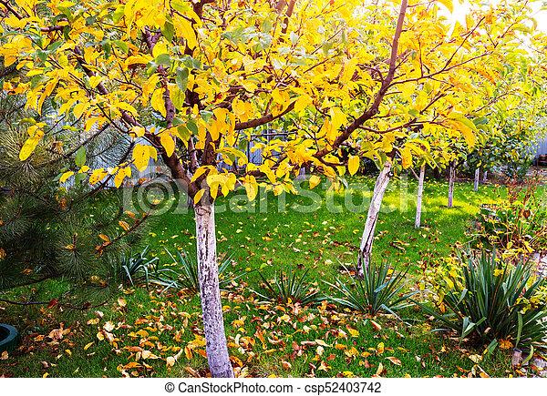 Autumn garden - csp52403742