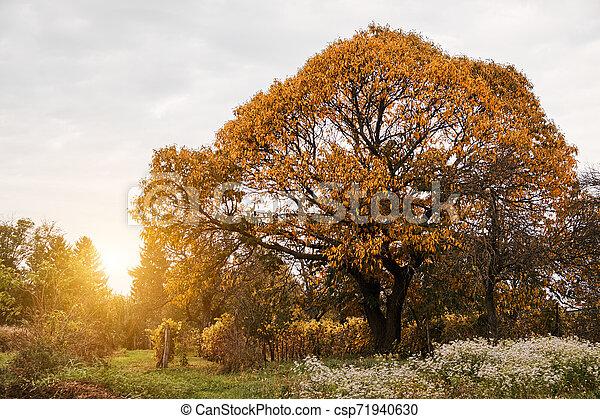 Autumn garden - csp71940630