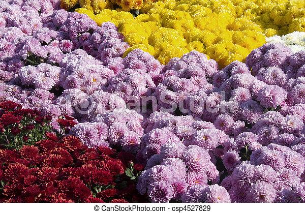 Autumn Glory In Flowers - csp4527829