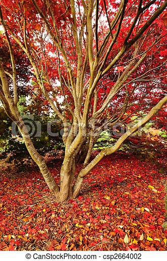 Autumn glory in the red carpet - csp2664002