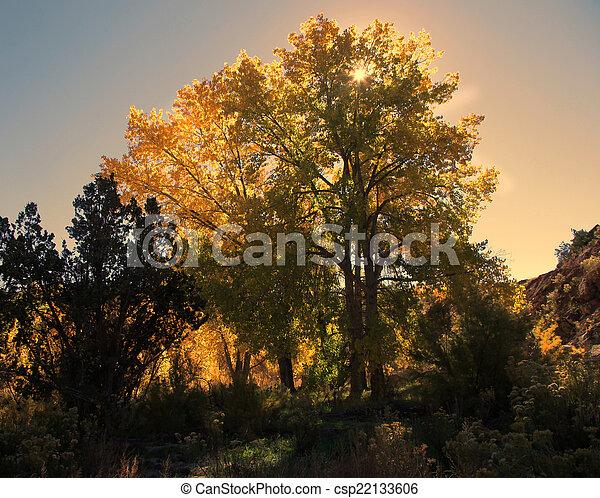 Autumn Glory - csp22133606