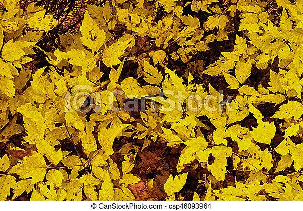 Autumn Gold - csp46093964