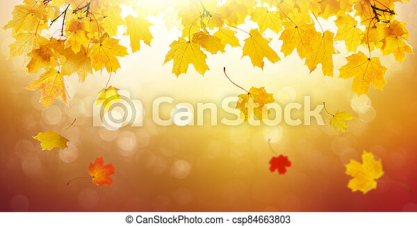 Autumn golden abstract background with bokeh light and colorful fall leaves. - csp84663803
