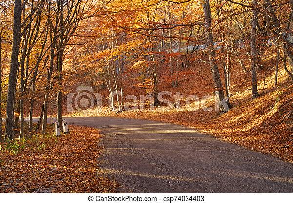 Autumn golden forest. - csp74034403