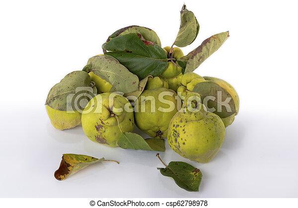 Autumn green quince. White background. - csp62798978