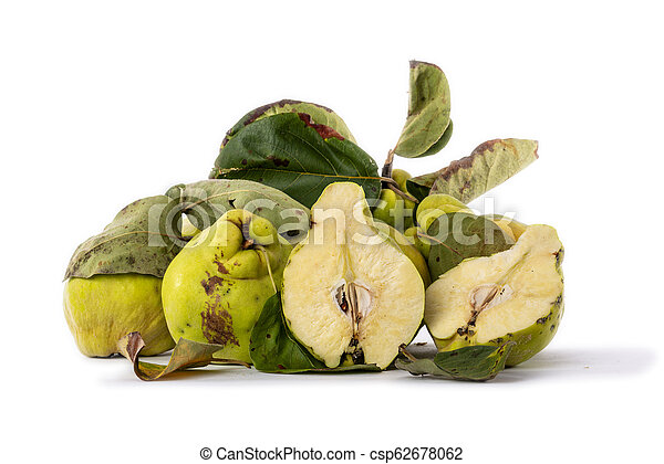 Autumn green quince. White background. - csp62678062