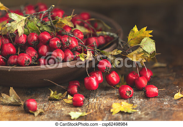 Autumn harvest Hawthorn berry with leaves in bowl on a wooden table background - csp62498984
