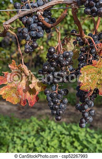 Autumn Harvest - csp52267993