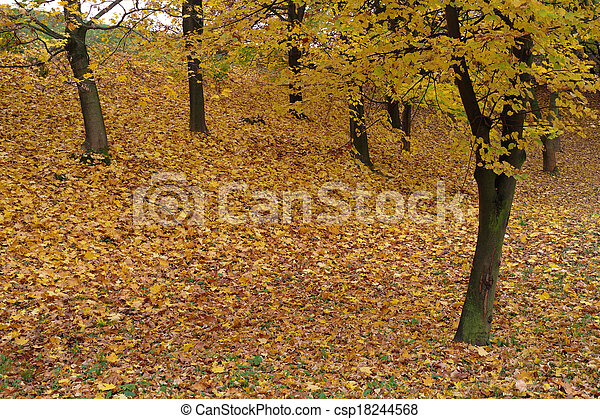 autumn in a park - csp18244568