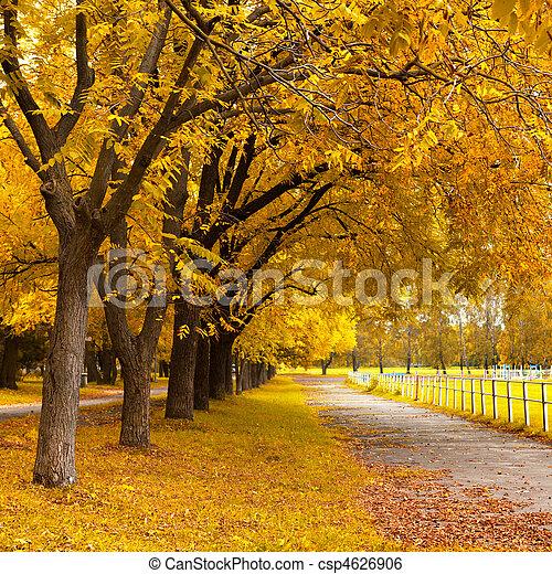 Autumn in a park - csp4626906
