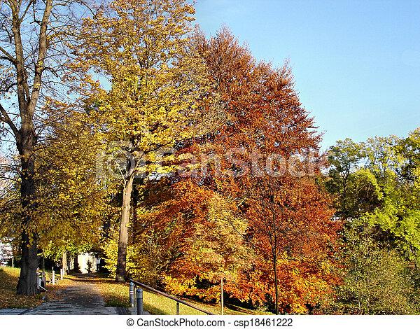 Autumn in a park - csp18461222