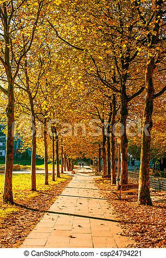 Autumn in a park - csp24794221