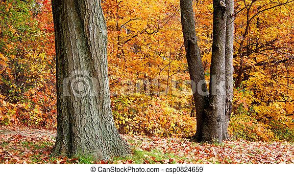 Autumn In A Park - csp0824659