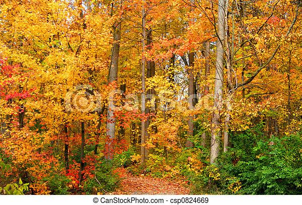 Autumn In A Park - csp0824669