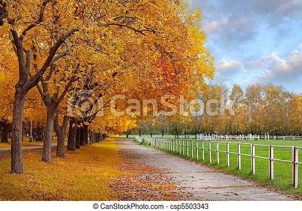 Autumn in a park - csp5503343