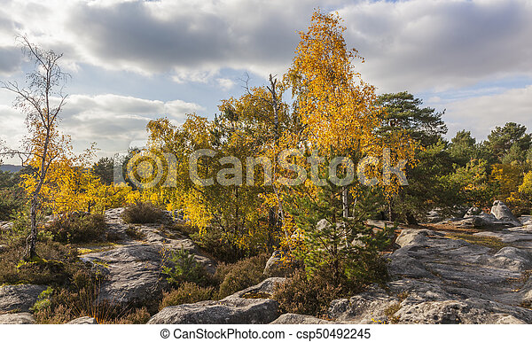 Autumn in Fontanebleau Forest - csp50492245