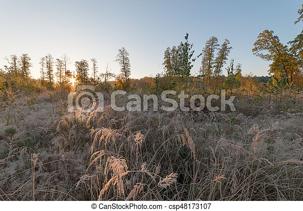 Autumn in sunny forest - csp48173107