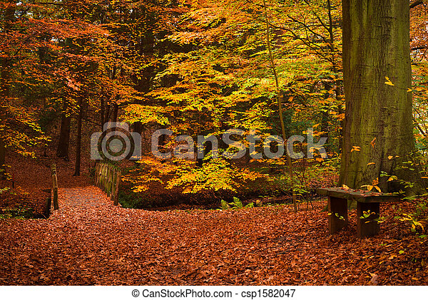 autumn in the forest - csp1582047