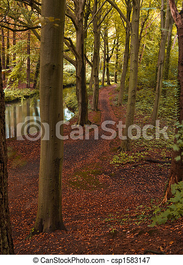 autumn in the forest - csp1583147
