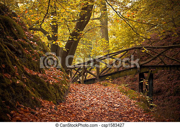 autumn in the forest  - csp1583427