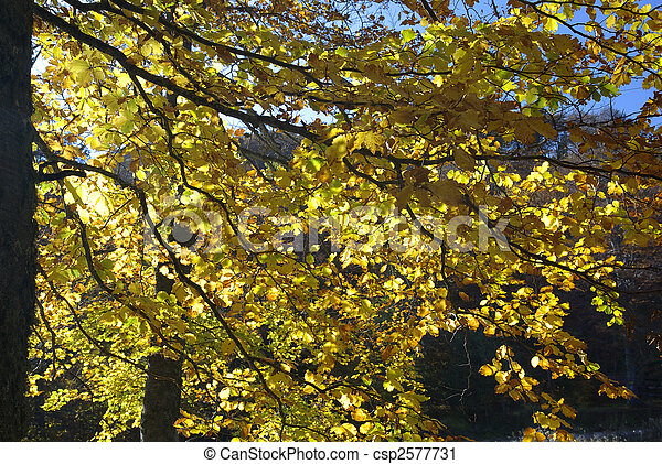 Autumn in the forest - csp2577731