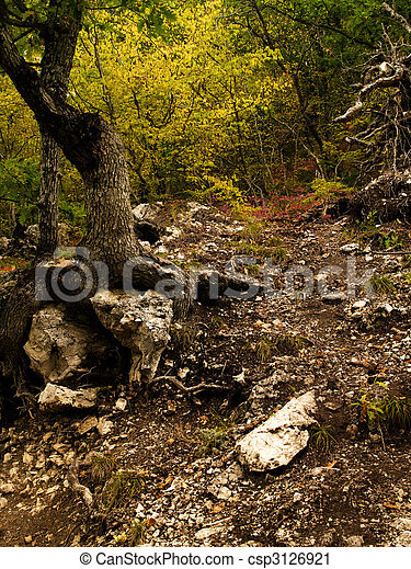 Autumn in the forest - csp3126921
