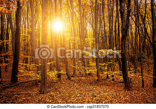 Autumn in the forest  - csp31837070