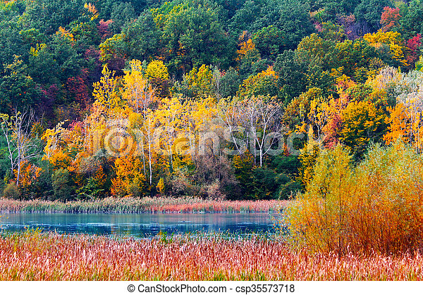 Autumn in the forest - csp35573718