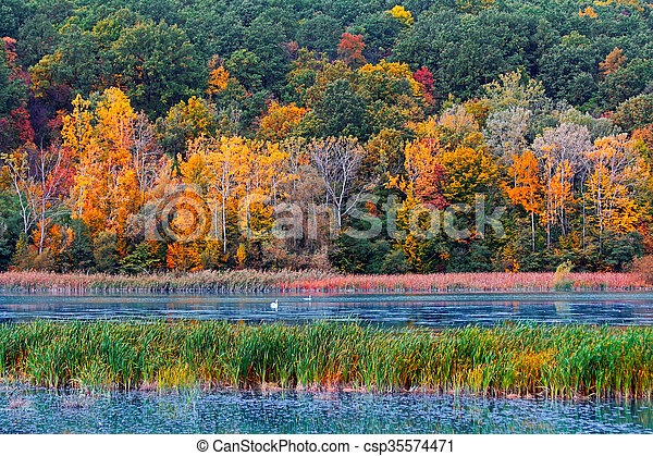 Autumn in the forest - csp35574471