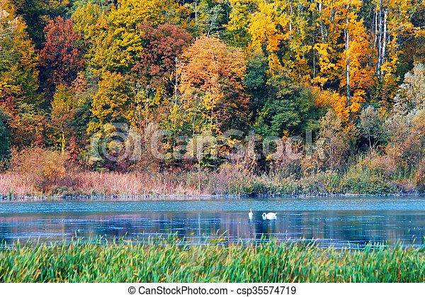 Autumn in the forest - csp35574719
