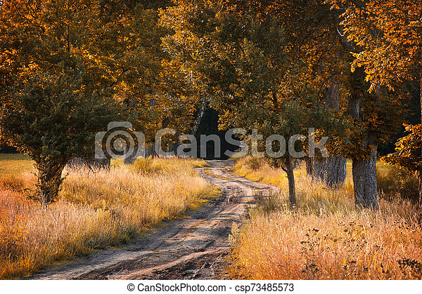 Autumn in the forest. - csp73485573