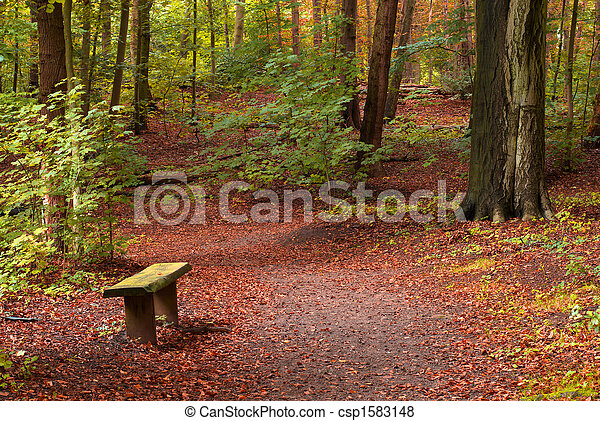 autumn in the forest - csp1583148
