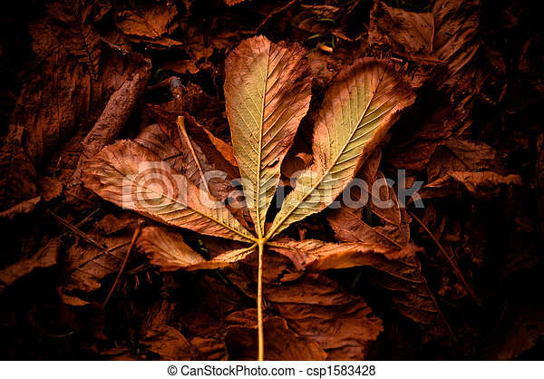 autumn in the forest  - csp1583428