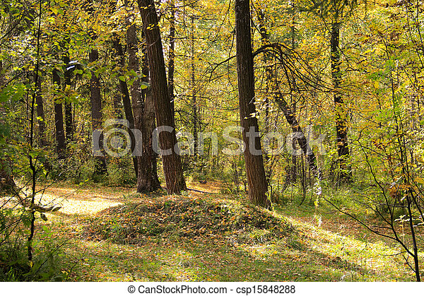Autumn in the forest - csp15848288