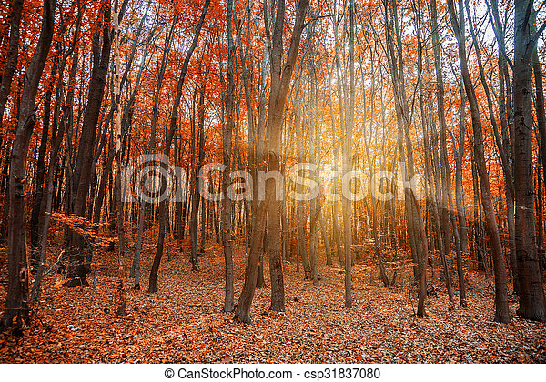 Autumn in the forest  - csp31837080