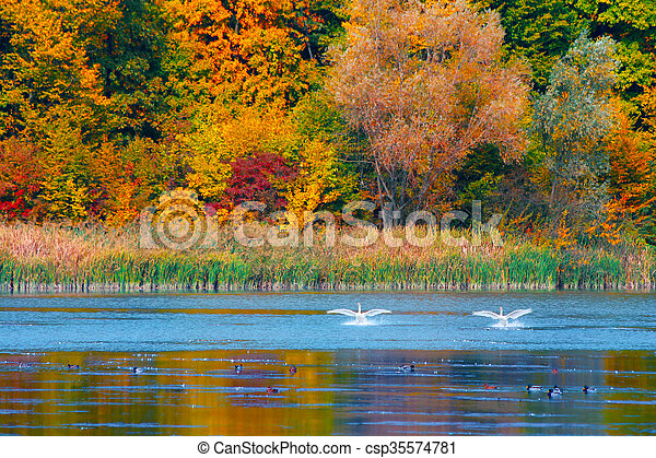 Autumn in the forest - csp35574781
