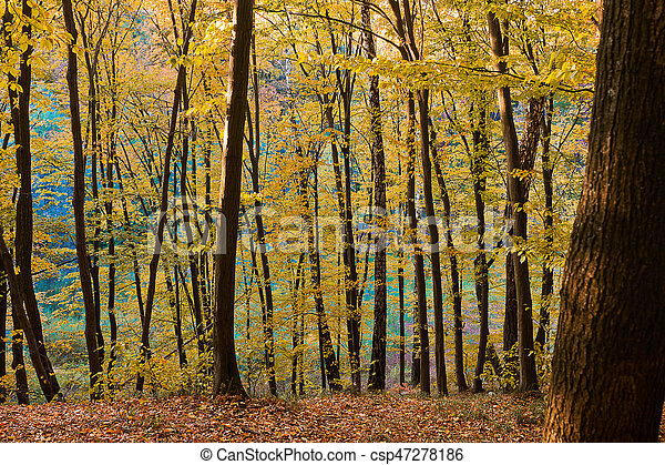 autumn  in the forest - csp47278186