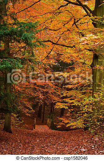 autumn in the forest - csp1582046